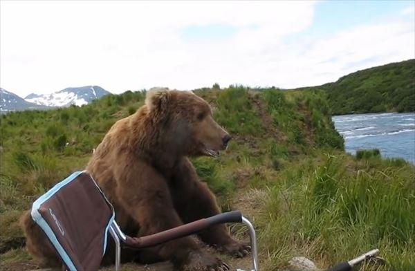 「兄ちゃん、どこから来たん?」野生の熊と心が通じた!