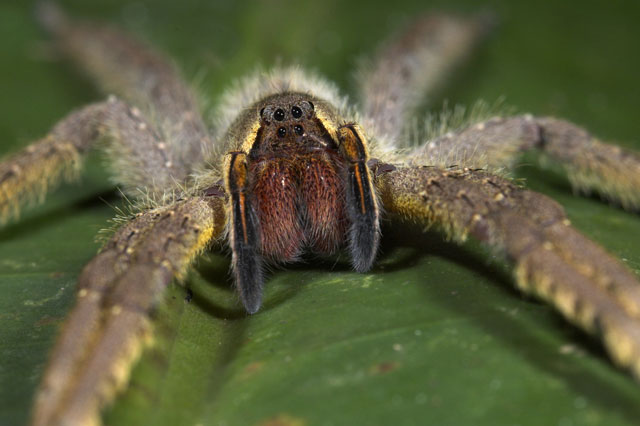 Nursery closed for a week after killer spider crawls out of bananas