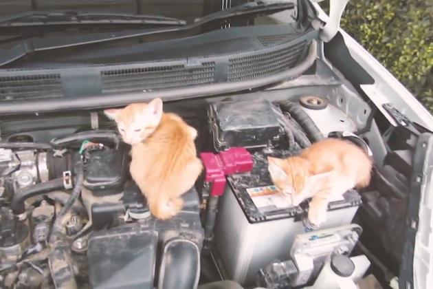 【ビデオ】日産、乗車前の「猫バンバン」を呼びかける