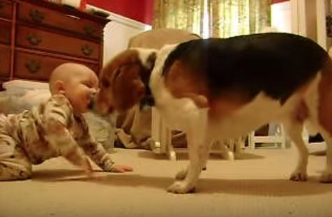 赤ちゃんにはじめて会ったビーグル犬の可愛すぎるリアクションが話題に【動画】
