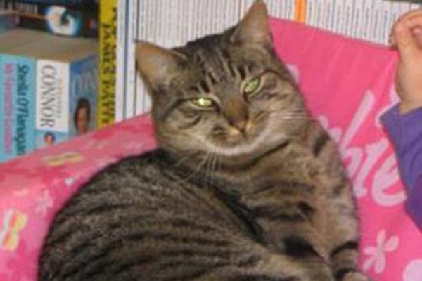 incredible animal journeys, amazing animals, jessie the cat