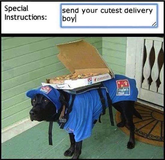 dog delivering pizza