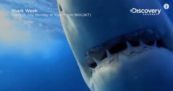 凶暴な巨大サメはどういう音楽が好きなのか?スピーカーを海中に沈めてみた【動画】