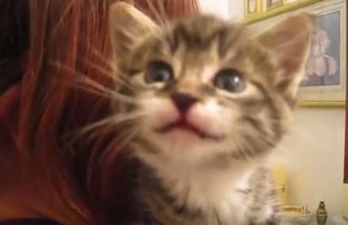 何を話しかけられても「ニャーニャー」返事する子ネコが可愛すぎる【動画】