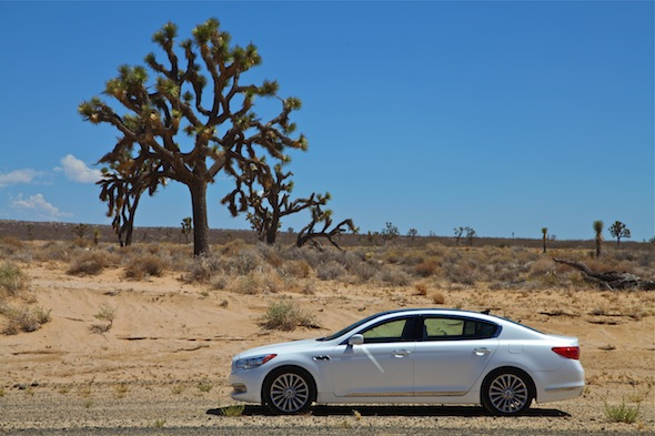 Kia and a Joshua tree