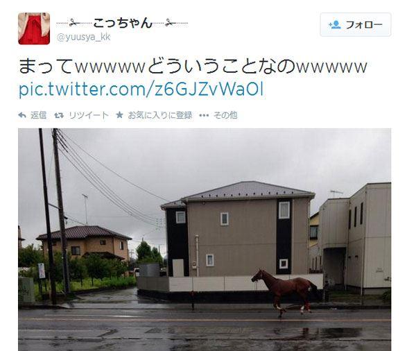 台風11号の被害?住宅街を全力で脱走する動物の姿が話題に