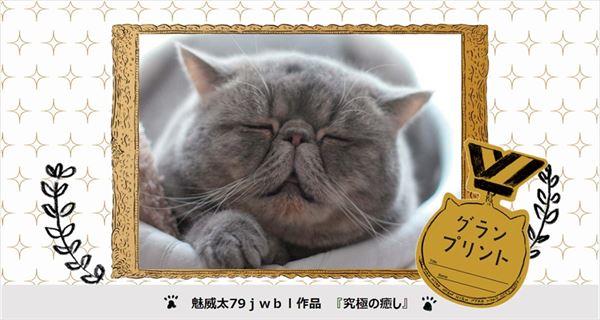 全国から寄せられた288匹のブサかわ猫ちゃんが山手線を11月18日から15日間ジャック