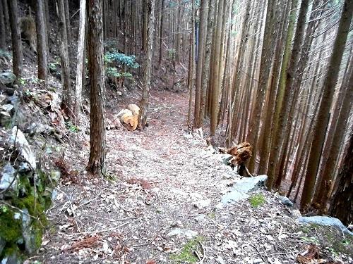 ●川上村から五社峠を越えて隣町へ抜ける山道は、今も残る土倉道の一部だ