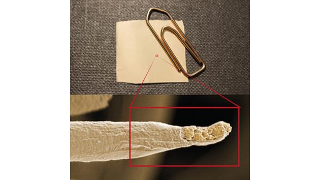 KTH's algae-based antibacterial thread