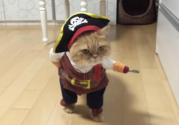 海賊ですけどなにか?完璧すぎるニャンコのコスプレ 【動画】