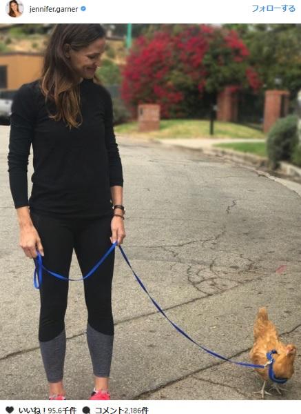 ジェニファー・ガーナー、ペットのニワトリとのお散歩の写真をインスタグラムに投稿