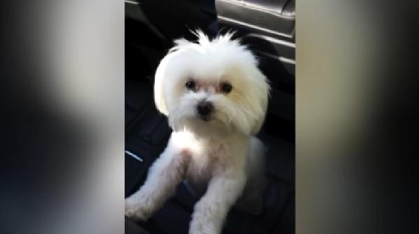 3年間行方不明になっていた愛犬がおよそ2000kmも離れた場所で発見される