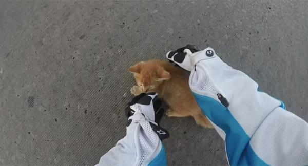 道路の真ん中に紛れ込んだ子ネコを女性ライダーが決死の救助、世界中から称賛の声【動画】