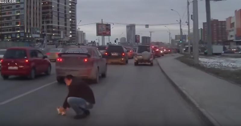 危機一髪! 車にひかれる寸前の子猫をドライバーが救出