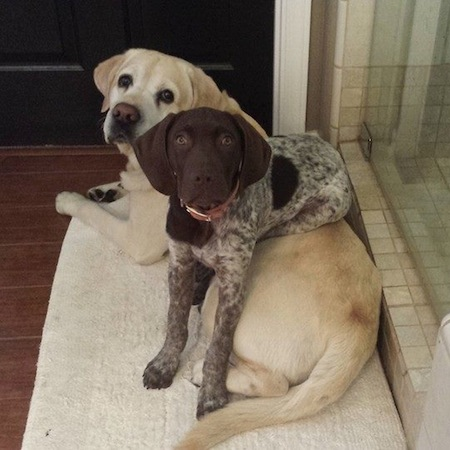 dogs sitting on dogs