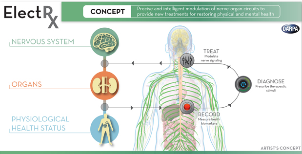 DARPA's new program plans to stimulate your nerves for self-healing