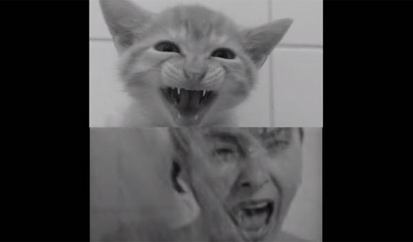 ヒッチコックの『サイコ』をニャンコが再現した動画が可愛いすぎてヤバいwww【動画】