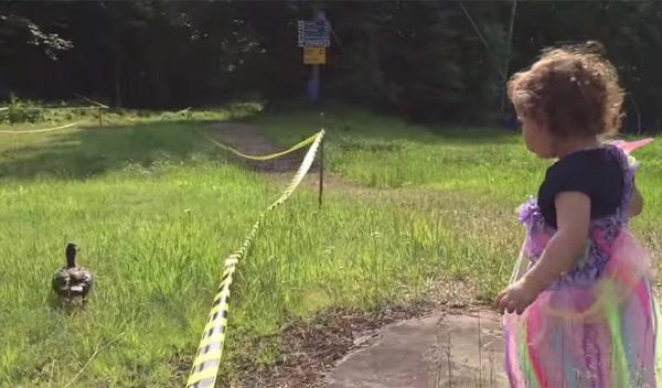 女の子がアヒルにエサをあげようと近寄る→まさかの悲しい展開に【動画】