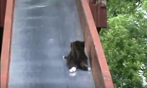 滑り台を次々とすべり落ちていく子ニャンコたちが可愛すぎるwww【動画】