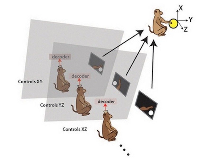 cerebro monos conectado