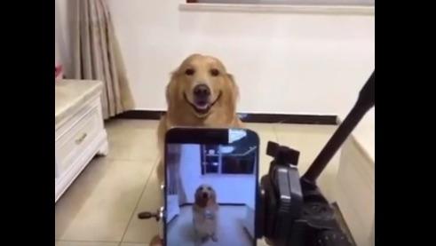 カメラに向かってプロ級のニッコリ笑顔を見せるゴールデン・レトリーバーが大人気【動画】