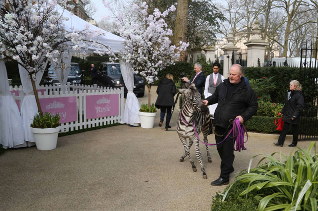 Tamara Ecclestone's daughter Sophia celebrates her first birthday - and a zebra came to her party!