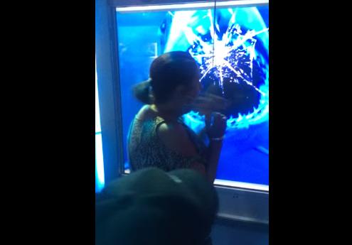 水族館で巨大サメが女性客に突撃!強烈なヘッドで水槽をカチ割る驚愕映像