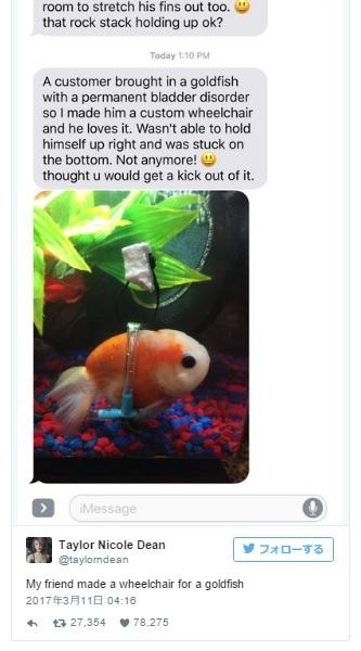 うまく泳げなくなった金魚にお手製の魚用「車イス」をプレゼント!