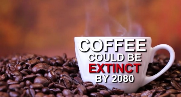 コーヒーが2080年までに姿を消す可能性が浮上!?