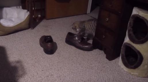 靴になんでも詰めたがる子ニャンコが可愛すぎるwww【動画】