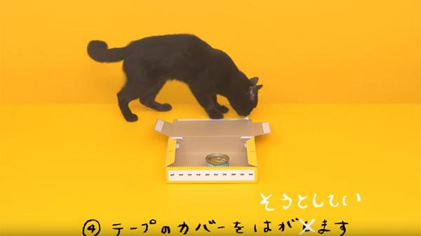 クロネコが器用に箱を組み立て・・・られない!話題のニャンコ動画のNG集が可愛すぎる【動画】