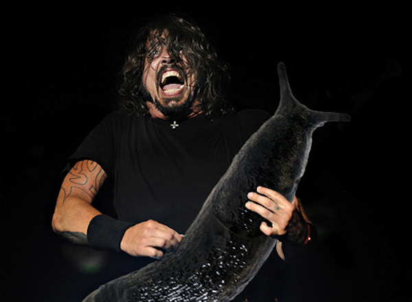 slug solos, dave grohl foo fighters