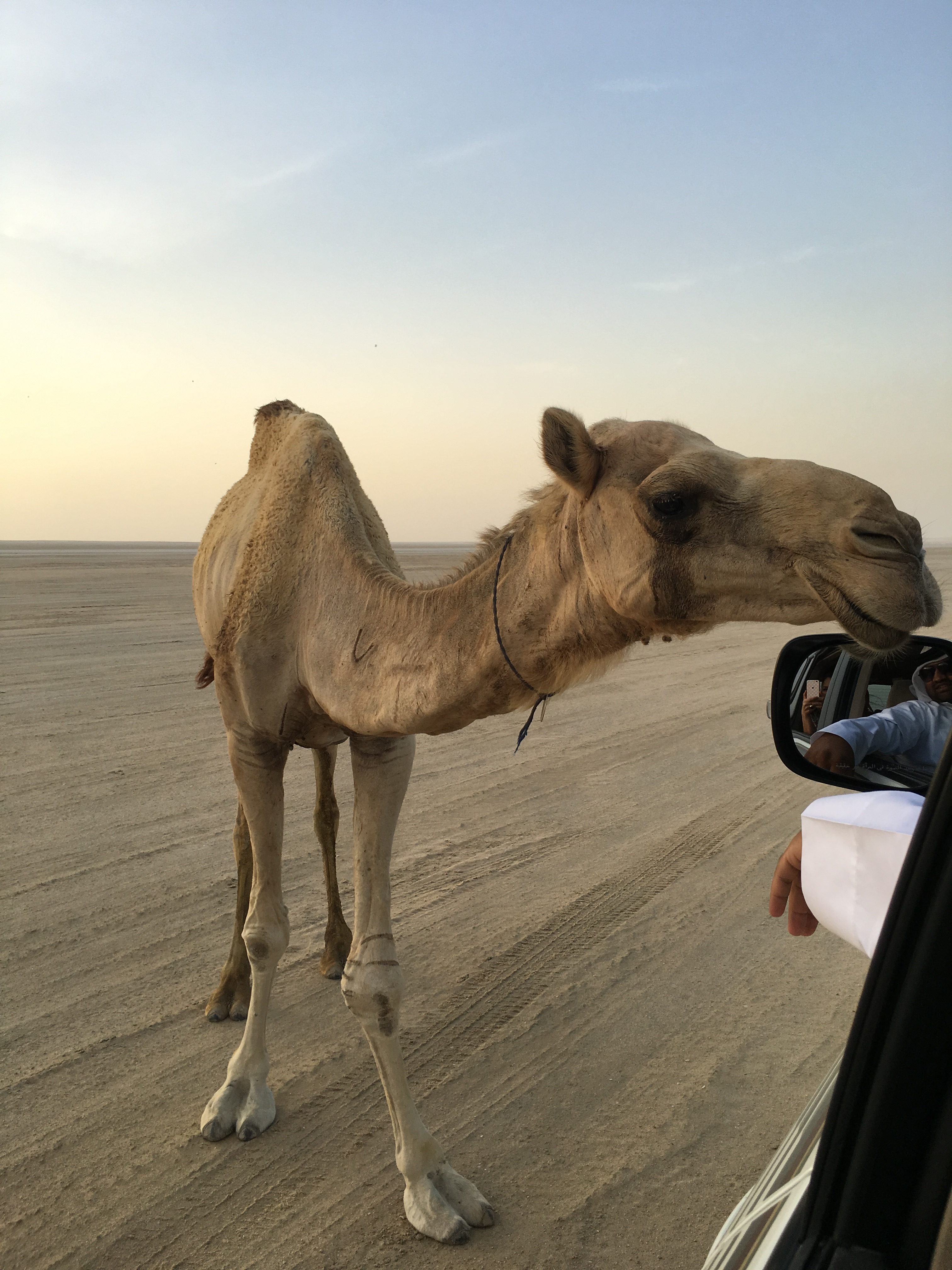 Monique Lhuillier travel diary: Such an incredible experience meeting this little guy