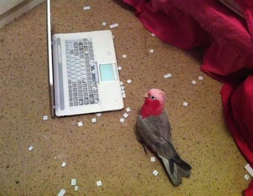 jerk birds, bird attack, asshole birds, mean birds