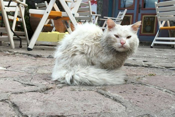 incredible animal journeys, amazing animals, kunkush the cat
