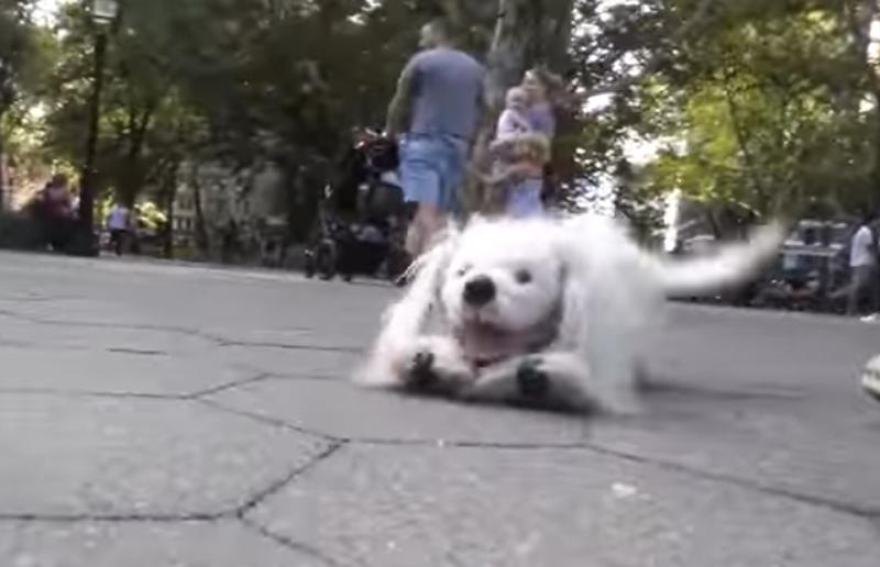 まるで本物! 史上最高のパペット・ドッグ、そのリアル過ぎる動きに驚きの声