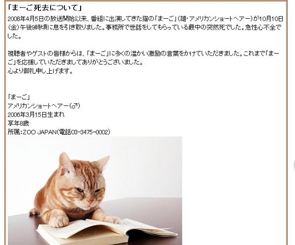テレ東『週刊ニュース新書』のマスコット猫「まーご」急死にネット上でも悲しみの声