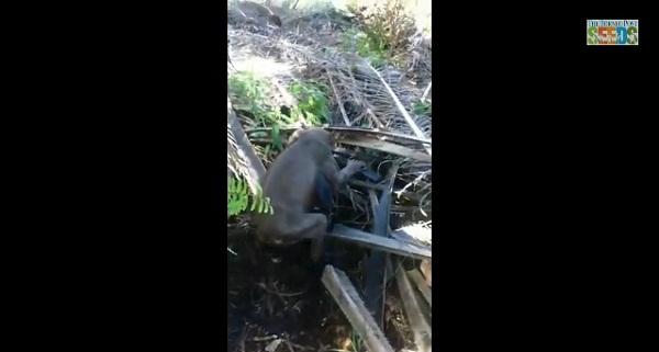 地球外生物か!?ジャングルで発見された謎の生物が話題に【動画】
