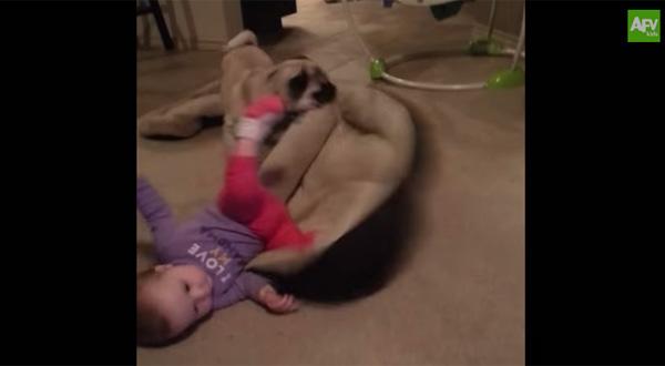 赤ちゃんにお気に入りの寝床を占拠された犬がとった驚くべき行動とは?【動画】