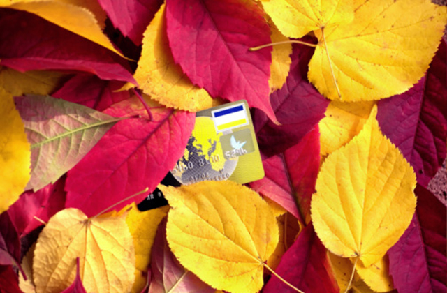 Leaves and card
