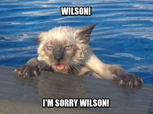 meme contest winners, weekly meme contest, cat out of water