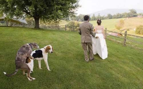 wedding ruined, funny wedding pics, funny wedding photos