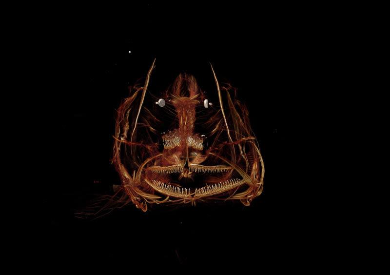 Mira bien esta criatura: se trata del pez capturado a más profundidad de la historia de la ciencia