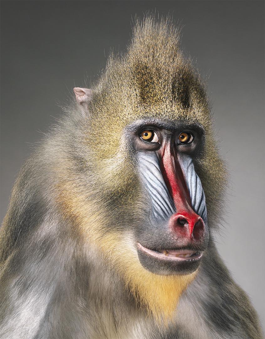 10 fotos de animales en extinción como nunca los habías visto