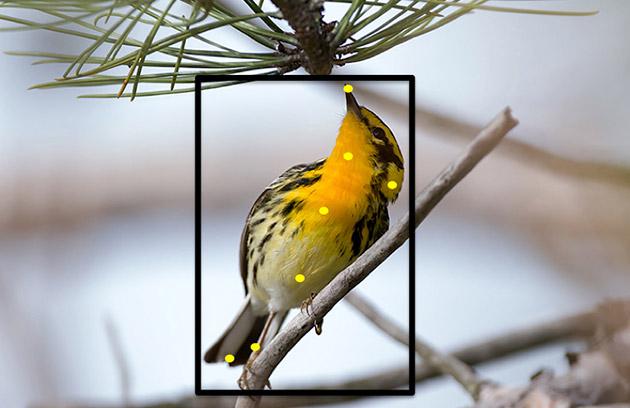 Vad är det för en fågel?