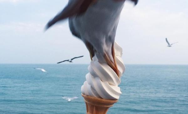 【奇跡】カモメがソフトクリームを横取り! その瞬間を捉えた写真が話題に
