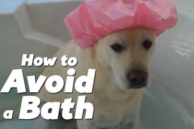 These kids and pets will do ANYTHING to avoid a bath (Video)