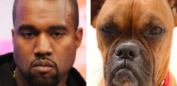 Thanks To This Twitter Account You Can Now See What Is Your Dog Lookalike