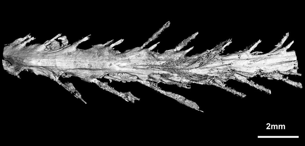 Des scientifiques ont retrouvé une queue de dinosaure à plumes (parfaitement conservée) pour la toute première fois Screen+Shot+2016-12-08+at+2.53.32+PM