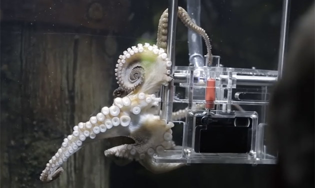 Lucky octopus finds photography job at a New Zealand aquarium